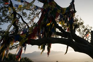 Sacred flags on the tree