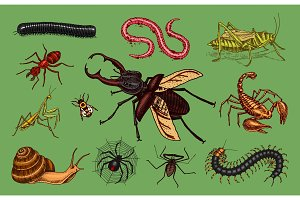 Big set of insects. Vintage