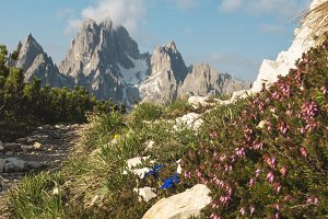 Flowers in Dolomites