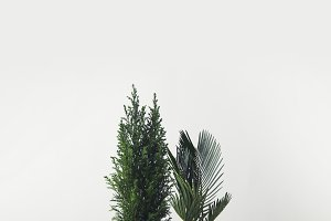 beautiful various green home plants