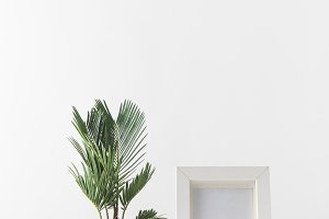 beautiful green potted plant and emp