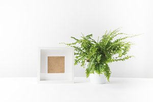 beautiful potted fern and empty phot