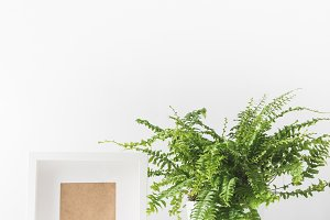beautiful green potted fern and empt