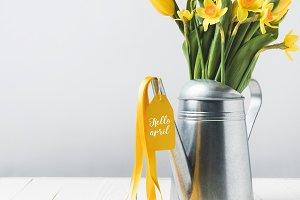 beautiful yellow daffodils and tulip