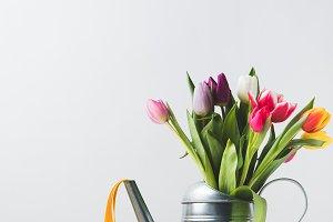beautiful colorful tulips in waterin