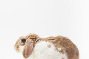 Closeup view of sitting rabbit isola