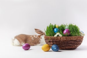 Lying bunny and basket with grass an