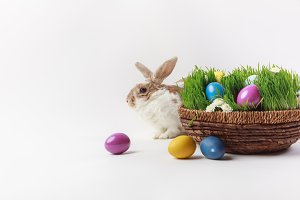 Rabbit and basket with grass and pai