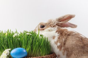 Rabbit near easter basket with grass