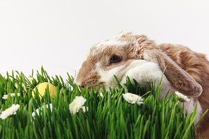 Rabbit and grass stemes with painted