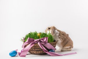 Easter basket with grass and eggs bo