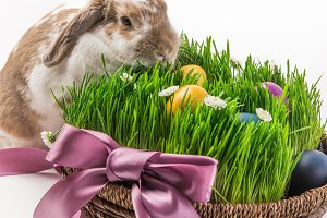 Rabbit near basket with grass and pa