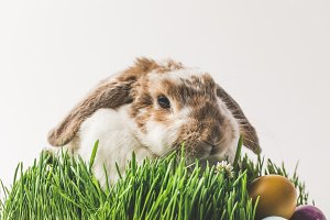 Rabbit sitting in grass with painted