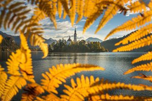 Lake Bled framed inside an autumn fe