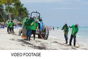 Workers cleaning beach from sea weed