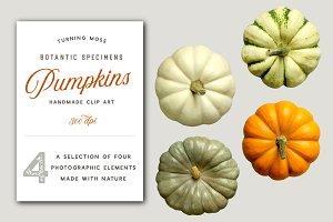 Pumpkins - Realistic Top View MockUp