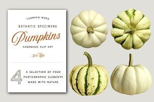 White Pumpkins - Realistic MockUp