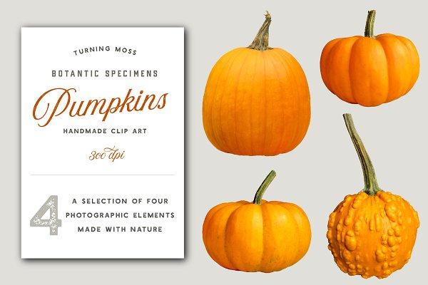 Orange Pumpkins - Realistic MockUps