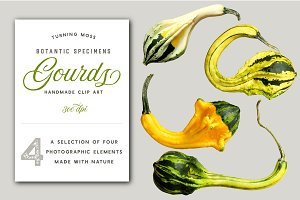 Gourds - Realistic Isolated MockUp