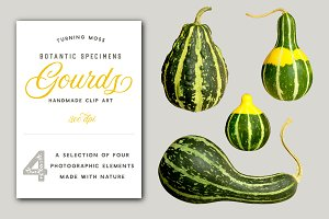 Gourds - Isolated Realistic MockUp
