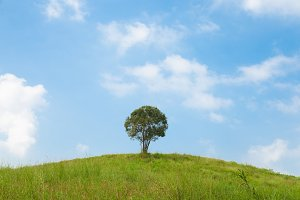 big tree on the hill