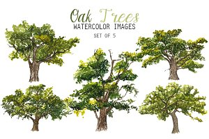 Watercolor Oak Trees Clipart