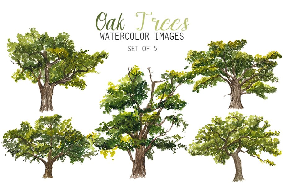 Watercolor Oak Trees Clipart   Custom-Designed ...