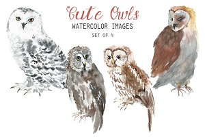 Watercolor Cute Owls Clipart