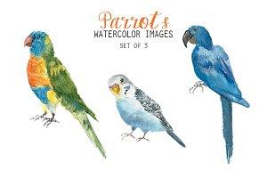 Watercolor Parrots Clipart
