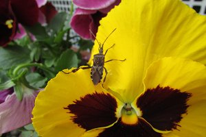 Bug and flower