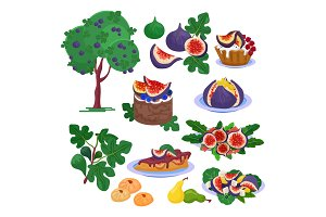Fig vector fresh fruity food and