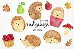 Watercolor Hedgehogs Clipart