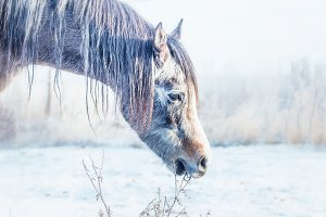 Horse in snowy winter