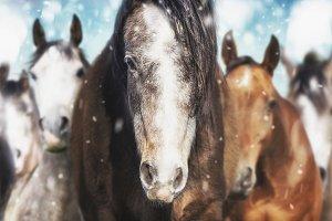 Herd of horses on frosty winter