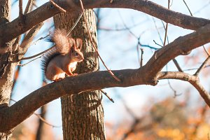 Little cute squirrel on a tree