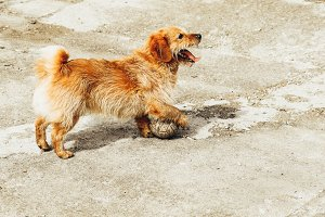 Cute dog playing