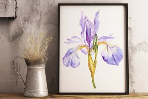 Watercolor Purple Iris Clipart&Print