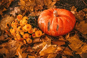 pumpkin and yellow flowers on an