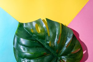 Monstera leaf on colorful background
