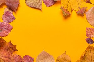 Maple Leaves on orange background