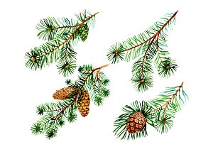 Branches of spruce and pine png set