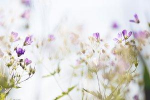 Summer flowers #6