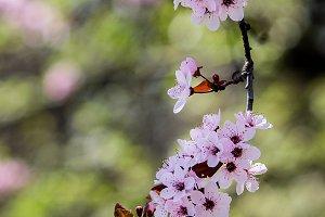 Spring tree flowers