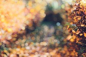 Autumn garden, fall background