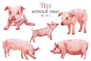 Watercolor Pig Clipart