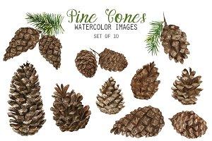 Watercolor Pine Cones Clipart