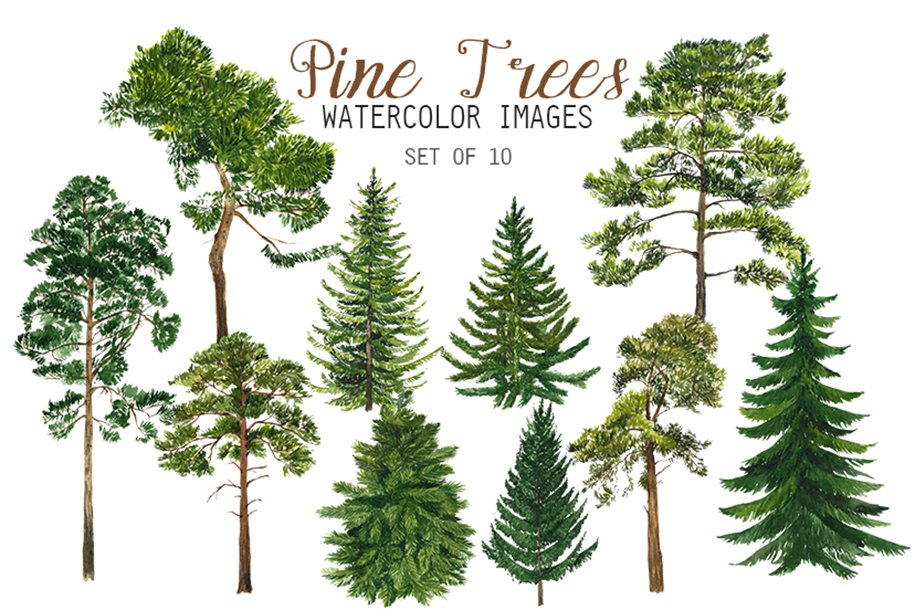 Watercolor Pine Trees Clipart | Pre-Designed Photoshop Graphics ...