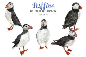 Watercolor Puffins Clipart