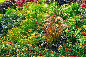 Blossoming flowerbed