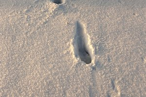 traces of the snow
